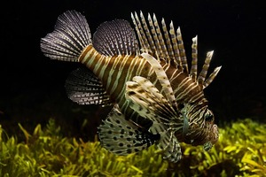 best aquarium filters